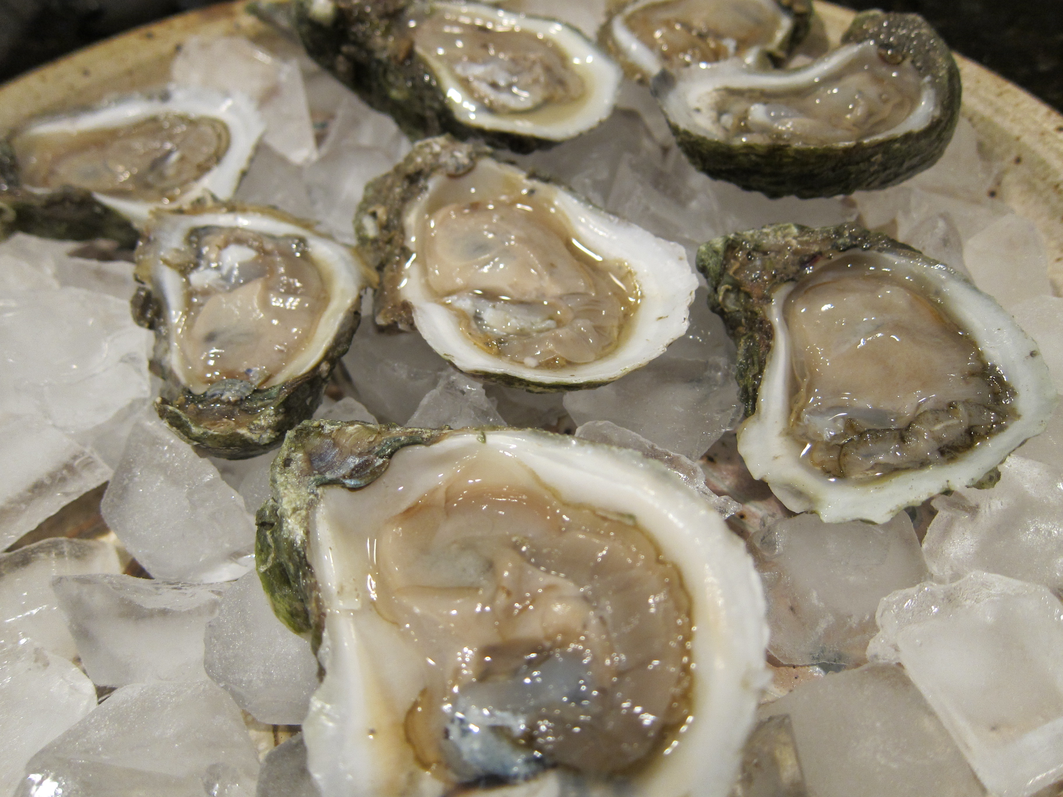 alive oysters with pearls
